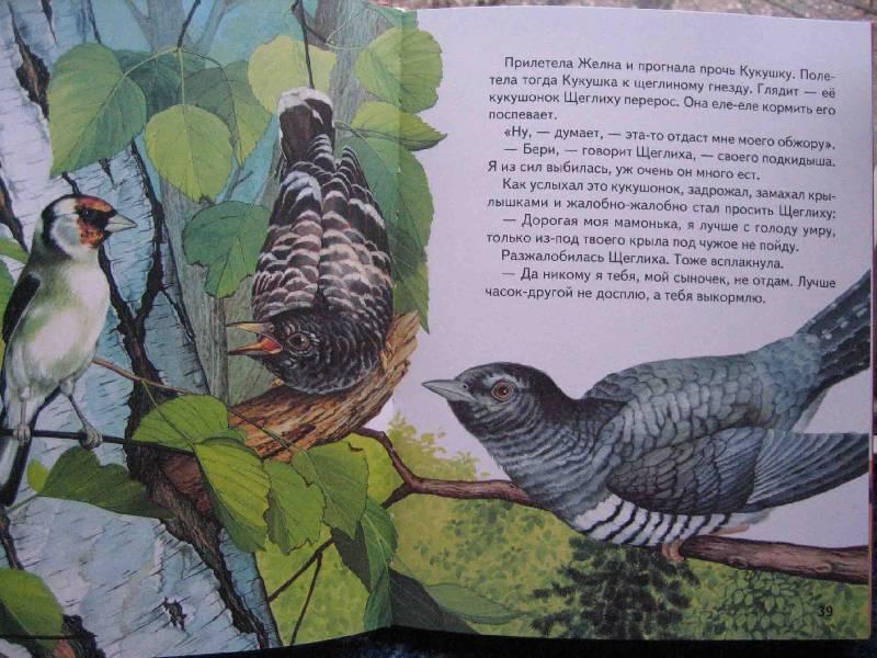 Иллюстрация 1 из 22 для Русские сказки о природе: Чижик-Пыжик - Евгений Пермяк | Лабиринт - книги. Источник: Трухина Ирина