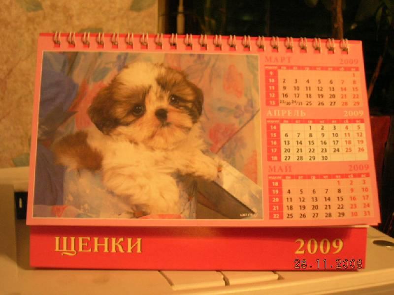 Иллюстрация 1 из 5 для Календарь 2009 Щенки (19806) | Лабиринт - сувениры. Источник: Карпова  Полина Викторовна
