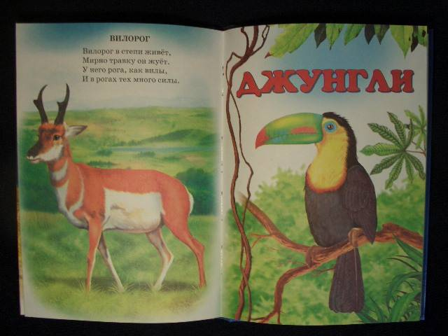 Иллюстрация 1 из 20 для Животный мир Земли - Владимир Степанов | Лабиринт - книги. Источник: кареглазка