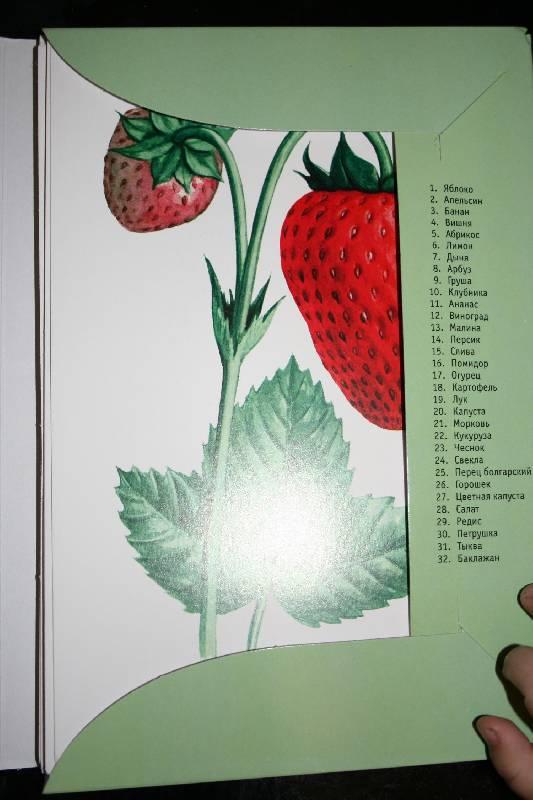 Иллюстрация 1 из 19 для Фрукты, Овощи. Ягоды | Лабиринт - книги. Источник: Счастливая мама