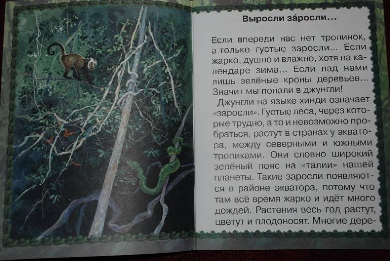 Иллюстрация 1 из 17 для Джунгли или путешествие по тропическому лесу - Ольга Колпакова | Лабиринт - книги. Источник: Lared