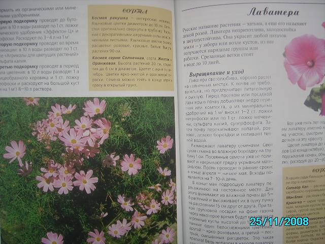 Иллюстрация 1 из 9 для Любимые цветы - Ганичкина, Ганичкин | Лабиринт - книги. Источник: Звездочка