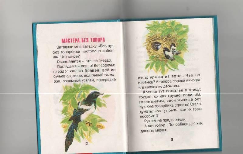 Иллюстрация 1 из 23 для Лесные сказки - Виталий Бианки   Лабиринт - книги. Источник: SVETLANKA