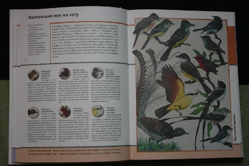 Иллюстрация 1 из 22 для Всемирная энциклопедия животных | Лабиринт - книги. Источник: Olorotitan