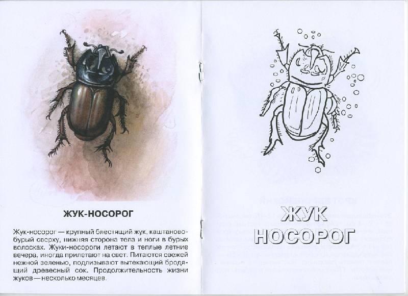 Иллюстрация 1 из 4 для Лисица. Живой мир Европы   Лабиринт - книги. Источник: Pallada