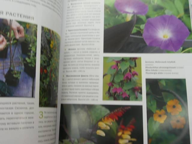 Иллюстрация 1 из 13 для Как вырастить сад своей мечты - Тоби Бакленд | Лабиринт - книги. Источник: Новичкова Елена Юрьевна