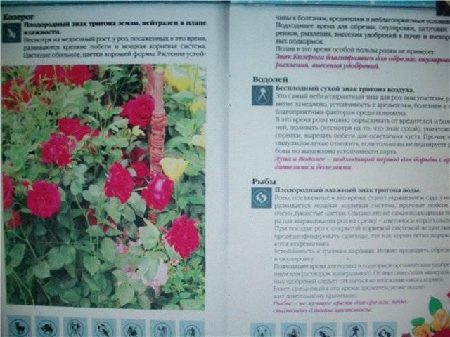 Иллюстрация 1 из 7 для Уход за розами. Лунный календарь - Наталья Анзигитова | Лабиринт - книги. Источник: света