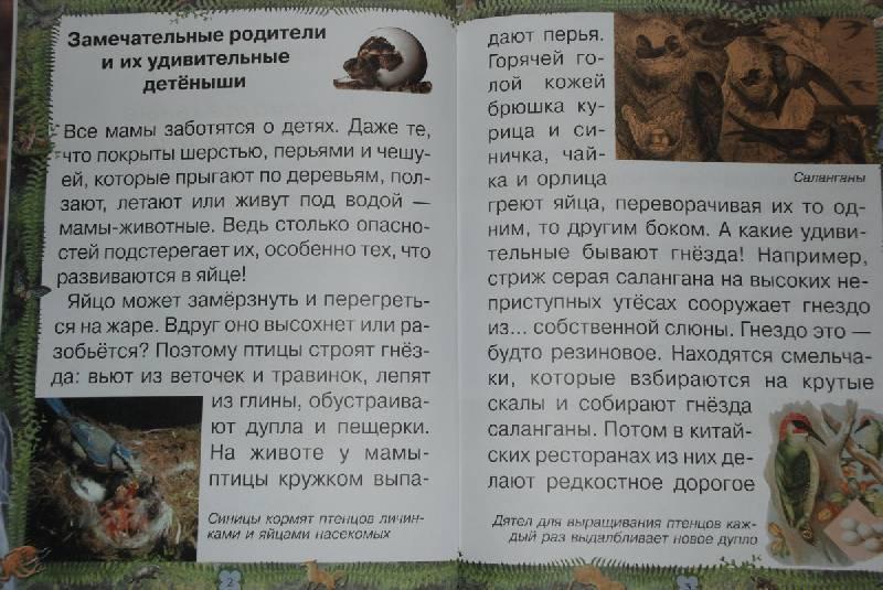 Иллюстрация 1 из 14 для Замечательные родители и их удивительные детеныши - Инна Гамазкова | Лабиринт - книги. Источник: Lared