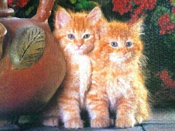 Иллюстрация 1 из 3 для Puzzle-1500. Котята (С-150267) | Лабиринт - игрушки. Источник: Hoty