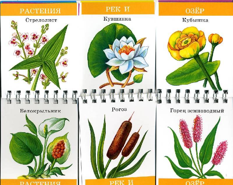 Иллюстрация 1 из 11 для Что где растет   Лабиринт - книги. Источник: РИВА