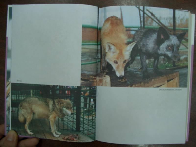 Иллюстрация 1 из 2 для Экзотические домашние животные - Инга Шинкаренко | Лабиринт - книги. Источник: кареглазка