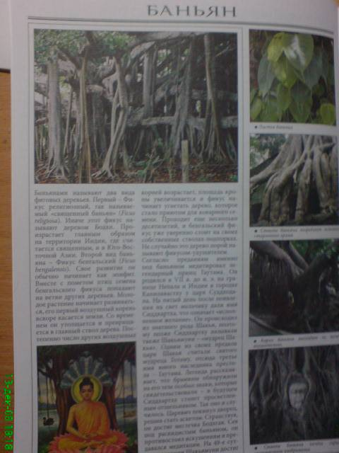 Иллюстрация 1 из 22 для Все о самых удивительных растениях - Неер Ян Ван дер | Лабиринт - книги. Источник: bhf