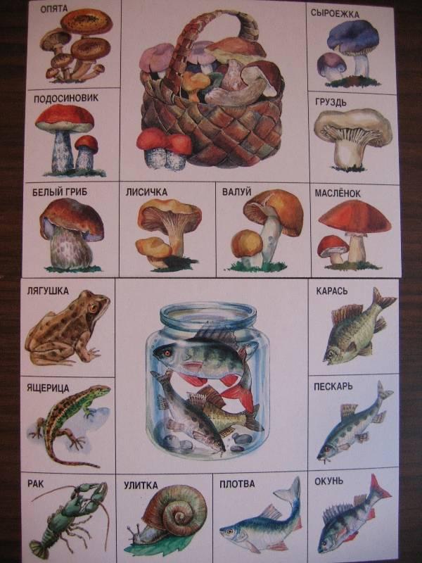 Иллюстрация 1 из 11 для Лото детское: На лесной тропинке (141334) | Лабиринт - игрушки. Источник: Крошка Сью
