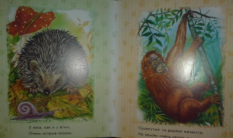 Иллюстрация 1 из 17 для В лесу, в джунглях - Олеся Квитка | Лабиринт - книги. Источник: Настёна