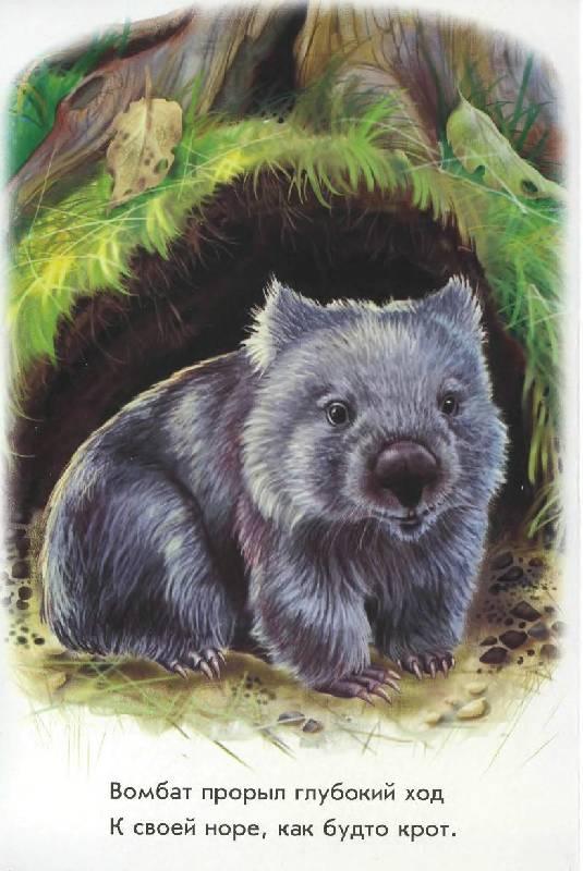 Иллюстрация 1 из 15 для В Австралии - Олеся Квитка   Лабиринт - книги. Источник: Caaat