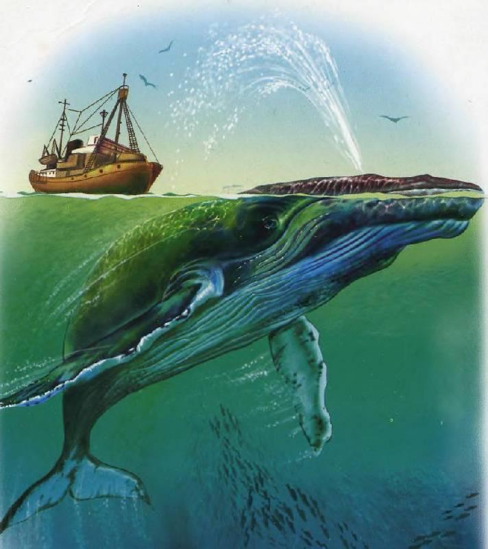Иллюстрация 1 из 18 для В небе, в море - Олеся Квитка | Лабиринт - книги. Источник: Caaat