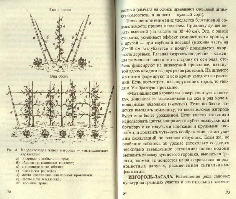 Иллюстрация 1 из 4 для Живые изгороди - Евгений Ярославцев | Лабиринт - книги. Источник: Zhanna