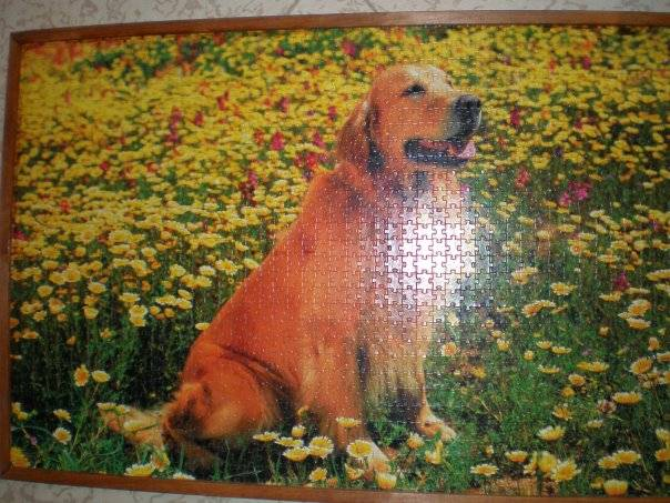 Иллюстрация 1 из 2 для Step Puzzle-1500 83008 Собака (Голден ретривер)   Лабиринт - игрушки. Источник: Hoty