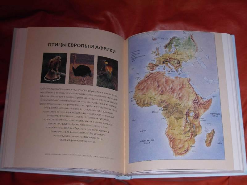 Иллюстрация 1 из 11 для Всемирная энциклопедия птиц - Дэвид Элдертон | Лабиринт - книги. Источник: ---Марго----