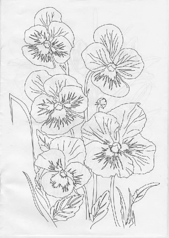 Иллюстрация 1 из 14 для Раскраска: Цветы (Р040104) | Лабиринт - книги. Источник: The Cat