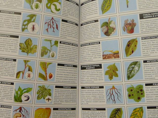 Иллюстрация 1 из 6 для Все о теплицах и зимних садах - Дэвид Хессайон | Лабиринт - книги. Источник: Новичкова Елена Юрьевна