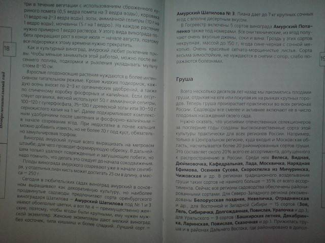 Иллюстрация 1 из 20 для Огород без хлопот - Андрей Туманов | Лабиринт - книги. Источник: Настёна
