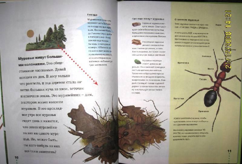 Иллюстрация 1 из 37 для Муравьи, кузнечики, пауки - Тинг Моррис   Лабиринт - книги. Источник: Матушка Ветровоск