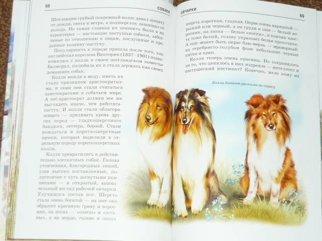 Иллюстрация 1 из 22 для Собаки - Е.И. Александрова | Лабиринт - книги. Источник: Ромашка:-)