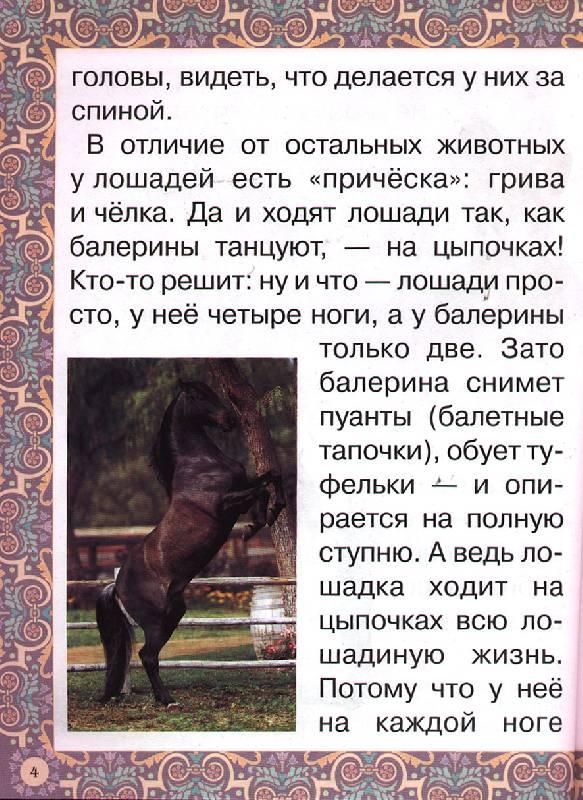 Иллюстрация 1 из 17 для Наша добрая лошадка - Наталия Ермильченко | Лабиринт - книги. Источник: OOlga