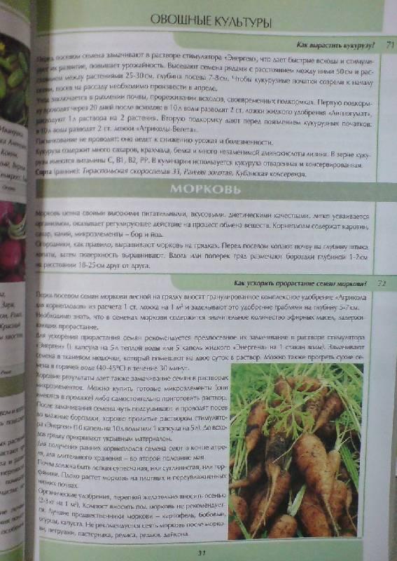 Иллюстрация 1 из 3 для Все о саде и огороде в вопросах и ответах - Октябрина Ганичкина   Лабиринт - книги. Источник: Настёна
