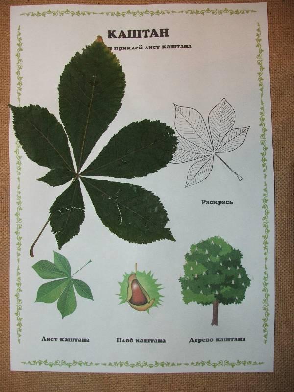 Иллюстрация 1 из 5 для Гербарий: Дикорастущие деревья и кустарники   Лабиринт - книги. Источник: Сороконожка