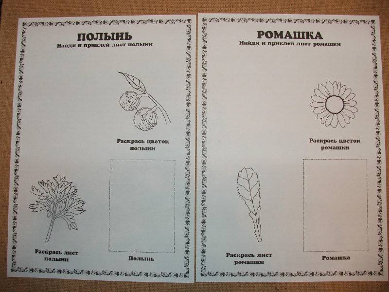 Иллюстрация 1 из 19 для Гербарий: Полевые цветы и травы | Лабиринт - игрушки. Источник: Сороконожка