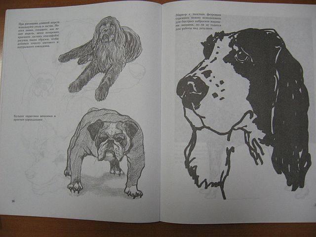 Иллюстрация 6 из 18 для Учитесь рисовать собак - Джереми Морган | Лабиринт - книги. Источник: rizik