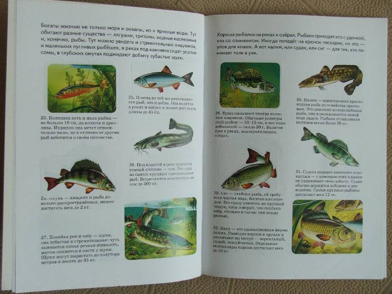 Иллюстрация 1 из 4 для Сборник-3: Рыбы, кошки, бабочки, собаки - А. Бугаев | Лабиринт - книги. Источник: Сороконожка