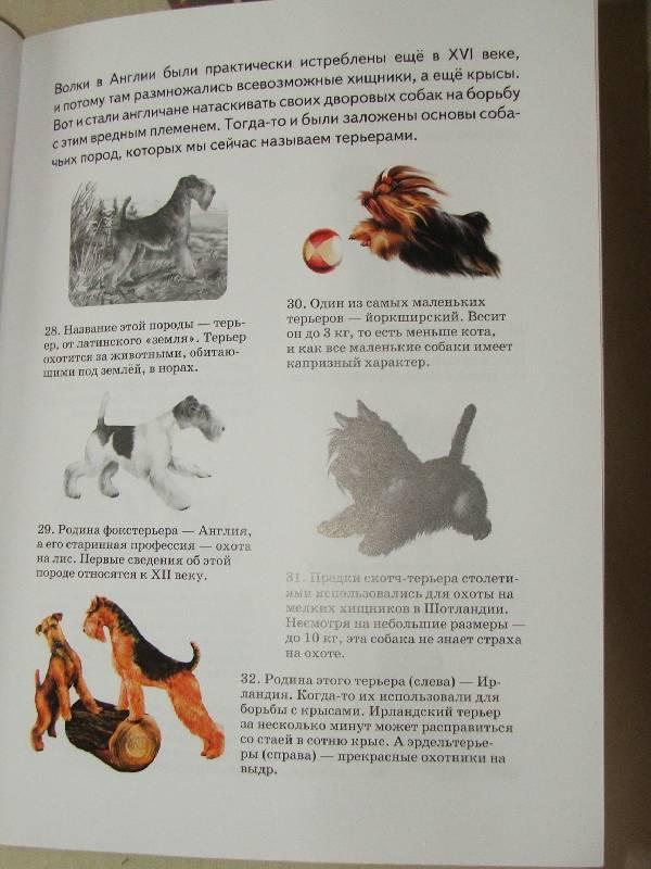 Иллюстрация 1 из 15 для Собаки - А. Бугаев   Лабиринт - книги. Источник: Сороконожка
