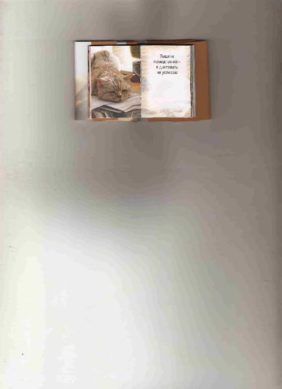 Иллюстрация 1 из 9 для Шеф всегда прав (К014) | Лабиринт - книги. Источник: Урядова  Анна Владимировна