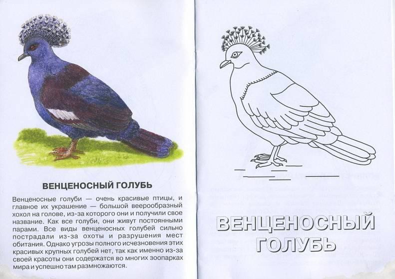 Иллюстрация 1 из 2 для Бородатая ящерица. Живой мир Австралии | Лабиринт - книги. Источник: Machaon