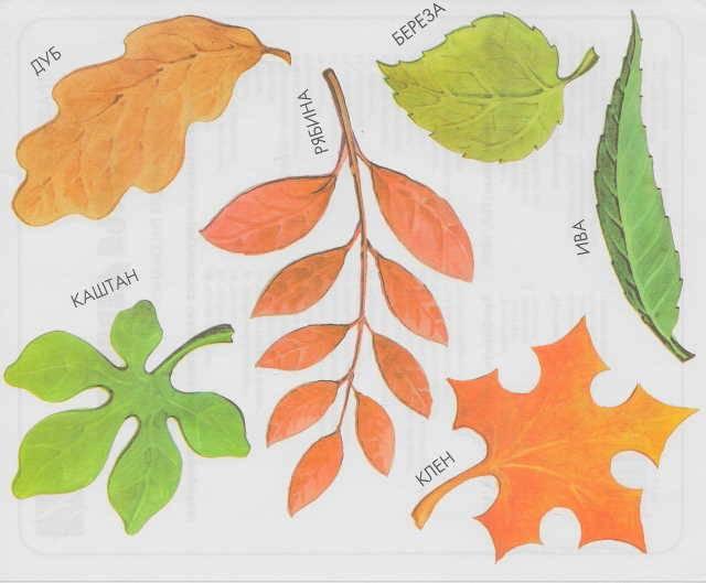 картинки листья деревьев