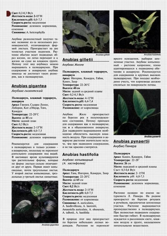 Иллюстрация 1 из 16 для Все об аквариумных растениях. Атлас-справочник - С. Раделов | Лабиринт - книги. Источник: Panterra
