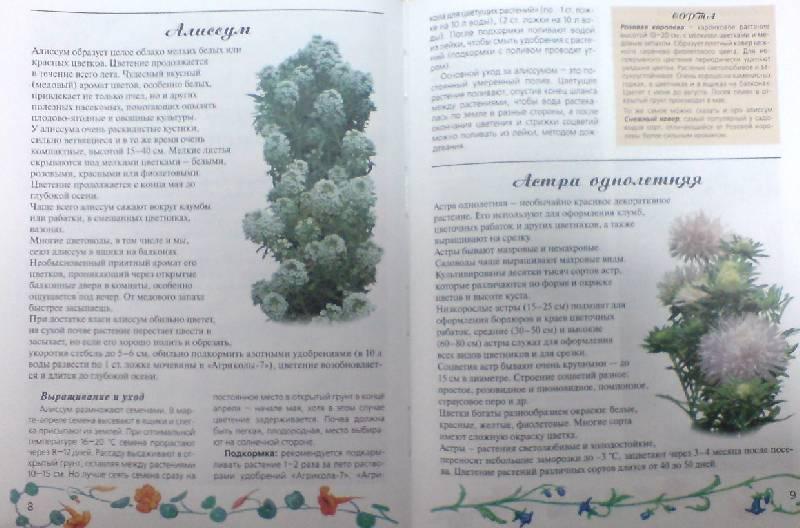 Иллюстрация 1 из 20 для Любимые цветы - Ганичкина, Ганичкин   Лабиринт - книги. Источник: Настёна