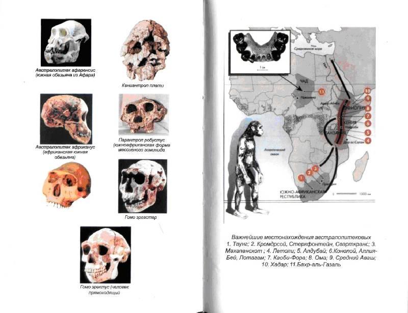 Иллюстрация 1 из 6 для Антропология - Александр Хомутов | Лабиринт - книги. Источник: Эльфийская девчушка