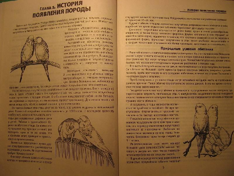 Иллюстрация 1 из 5 для Волнистые попугайчики - Линиза Жалпанова   Лабиринт - книги. Источник: NataliOk