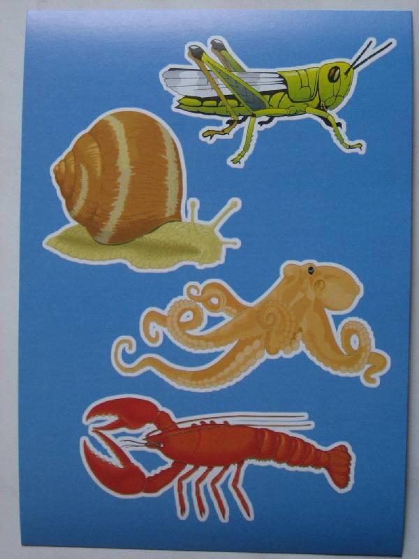 Иллюстрация 1 из 4 для Четвертый лишний.Животный и растительный мир   Лабиринт - книги. Источник: Dana-ja