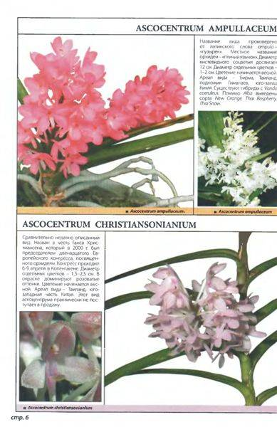 Иллюстрация 1 из 21 для Самые неприхотливые орхидеи - Рой Маккалистер | Лабиринт - книги. Источник: Юта
