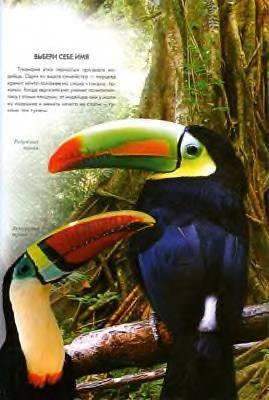 Иллюстрация 1 из 17 для Удивительные птицы мира - Валентина Мирошникова | Лабиринт - книги. Источник: Пчёлка Майя