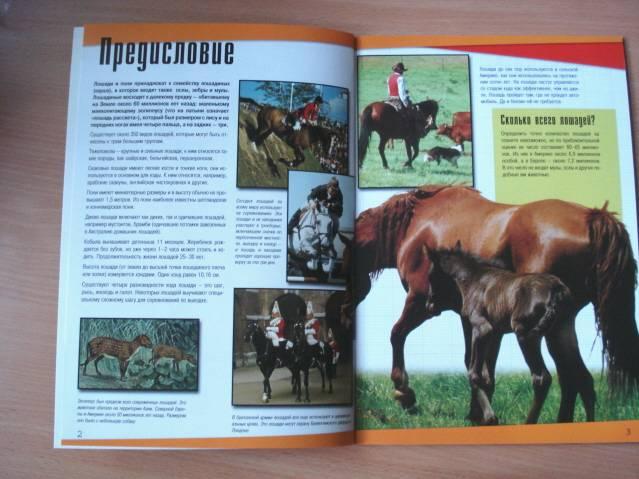 Иллюстрация 1 из 2 для Познакомься с миром: Лошади и пони | Лабиринт - книги. Источник: soika