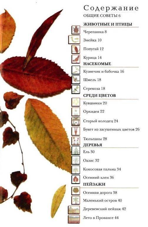 Иллюстрация 1 из 17 для Картины из цветов и листьев - Патрик Захарюк | Лабиринт - книги. Источник: Юта