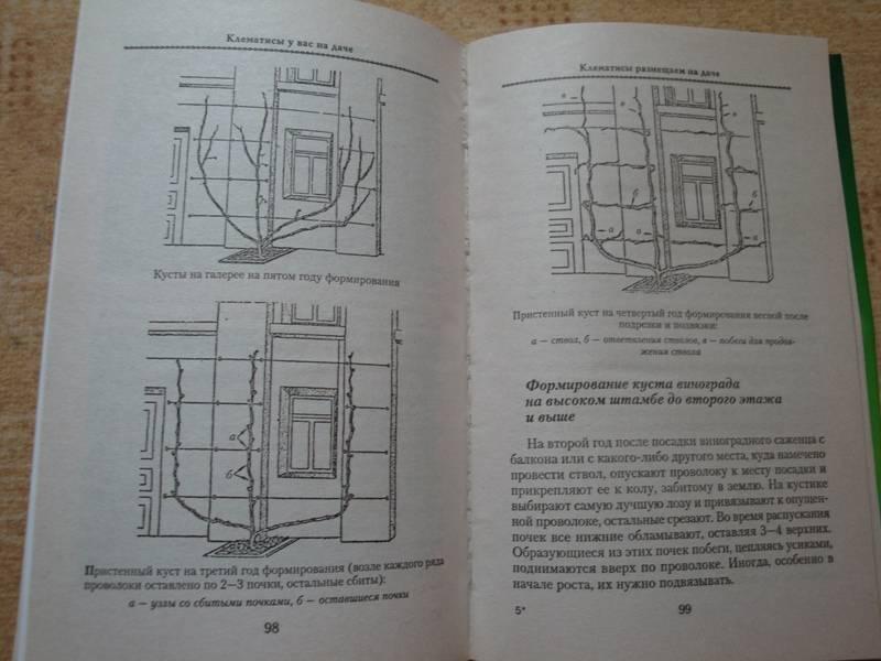 Иллюстрация 1 из 3 для Клематисы у вас на даче - Нелли Жуковская | Лабиринт - книги. Источник: ПандA