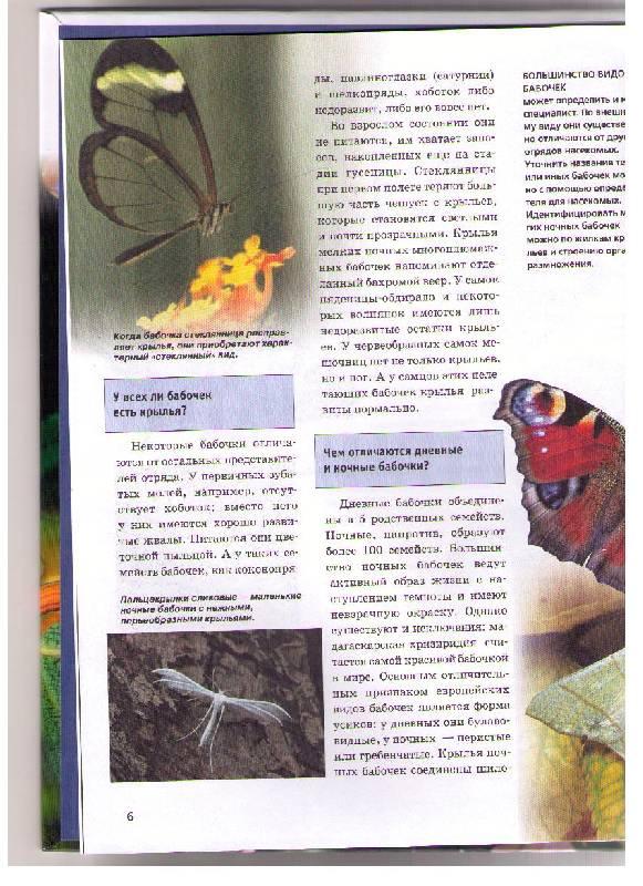 Иллюстрация 1 из 4 для Бабочки - Сабина Штегхаус-Ковач | Лабиринт - книги. Источник: Ya_ha