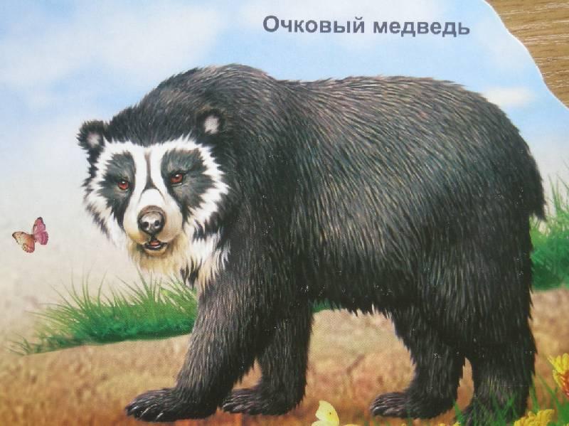 Иллюстрация 1 из 5 для Медведи (вырубка) | Лабиринт - книги. Источник: Мартынова  Анна Владимировна